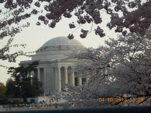 Cherry Blossoms 014