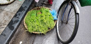 h bike greens
