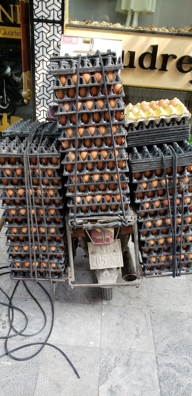 h eggs