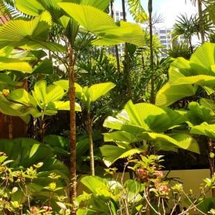 rasa garden