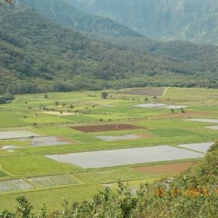 Kauai 051