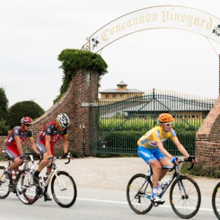 Pro cyclists, including Lance Armstrong, passing by Concannon Vineyard during the AMGEN Tour of California 2010. (PRNewsFoto/Concannon Vineyard)